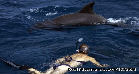 Swim with the dolphins  (#2 of 7) - Dolphin adventure in the ocean