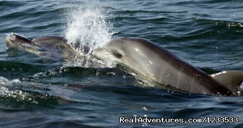 - Dolphin adventure in the ocean