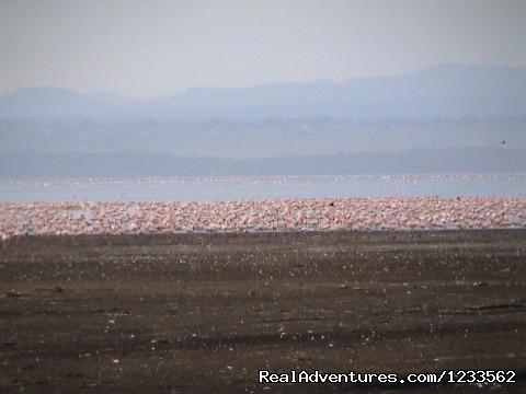 Image #2 of 24 - Budget Safaris to Kenya