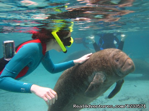 Swimming with the Manatees in Crystal River - Swim with the Manatees, Crystal River Snorkeling