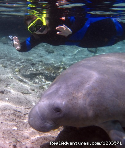 Thumbs up! - Swim with the Manatees, Crystal River Snorkeling