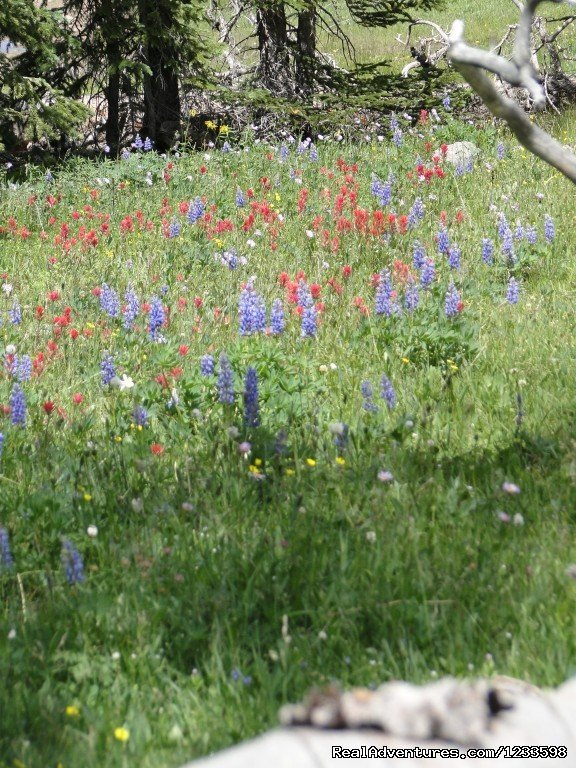 Mountain Wildflowers | Image #18/23 | Stagecoach Motor Inn
