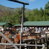 CM Ranch guests at the corral