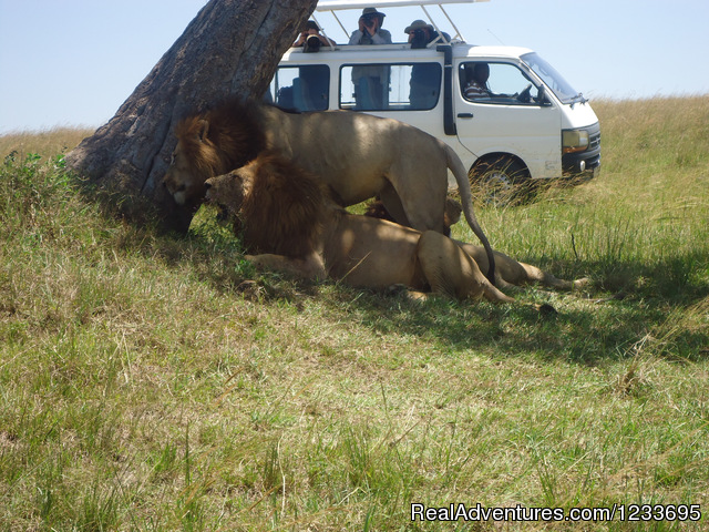 Home for budget travelers: Masai Mara Safaris