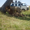 Home for budget travelers Wildlife & Safari Tours Kenya