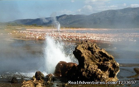 Hot springs in L.Bogoria - Africa Safari in Kenya
