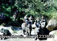 Elephant riding - Lanna Trips, the gate to south east asia