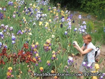 Photographing iris at Botanical Gardens - artbreak(TM) Arts Immersion Vacations