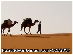 Camel Trip in Morocco (#8 of 9) - Trek in Morocco