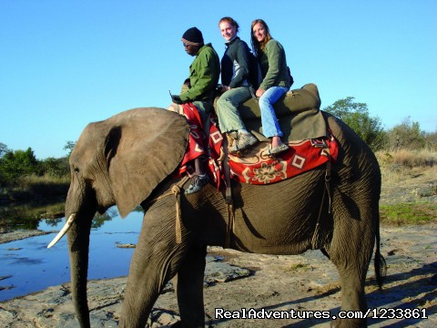 Elephant Back Riding - Nomad Africa Adventure Tours
