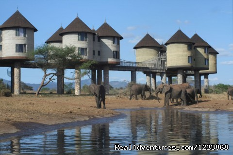 Two Days Tsavo East & Salt Lick Safari