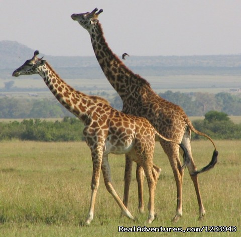 - Nafest tours and safaris