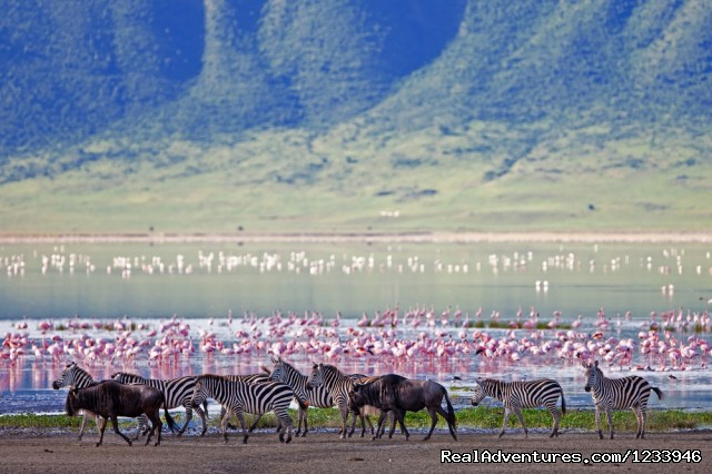 Flamingo in Lake Manyara Park - 7 Days 6 Nights Great Wildebeests Migration Safari