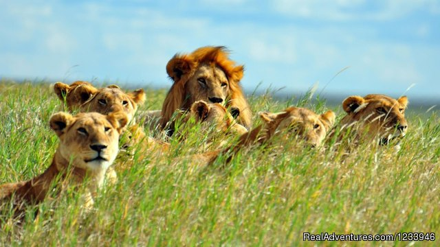 - 7 Days 6 Nights Great Wildebeests Migration Safari