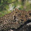 6 Days 5 Nights Camping Safari Arusha, Tanzania Wildlife & Safari Tours