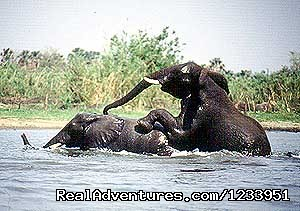 Africa Holiday Safaris: