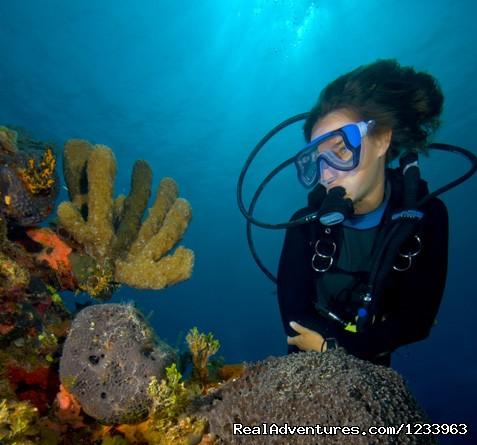Image #8 of 24 - Borneo Speedy Dive & Tour