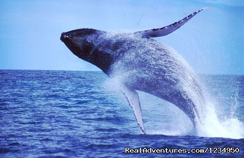 Whales watching (Prado, Bahia, Brazil) | Image #12/16 | Relax and security in Brazil at Pousada Aquavilla