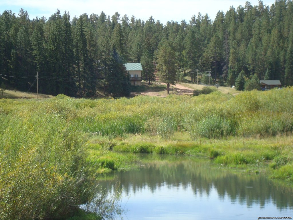 The house is located on the border with Pike National Forest | Image #15/26 | Pikes Peak Retreat In Pikes National Forest