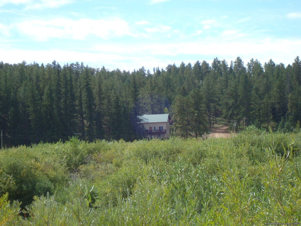 View of the house and Pike National Forest behind it