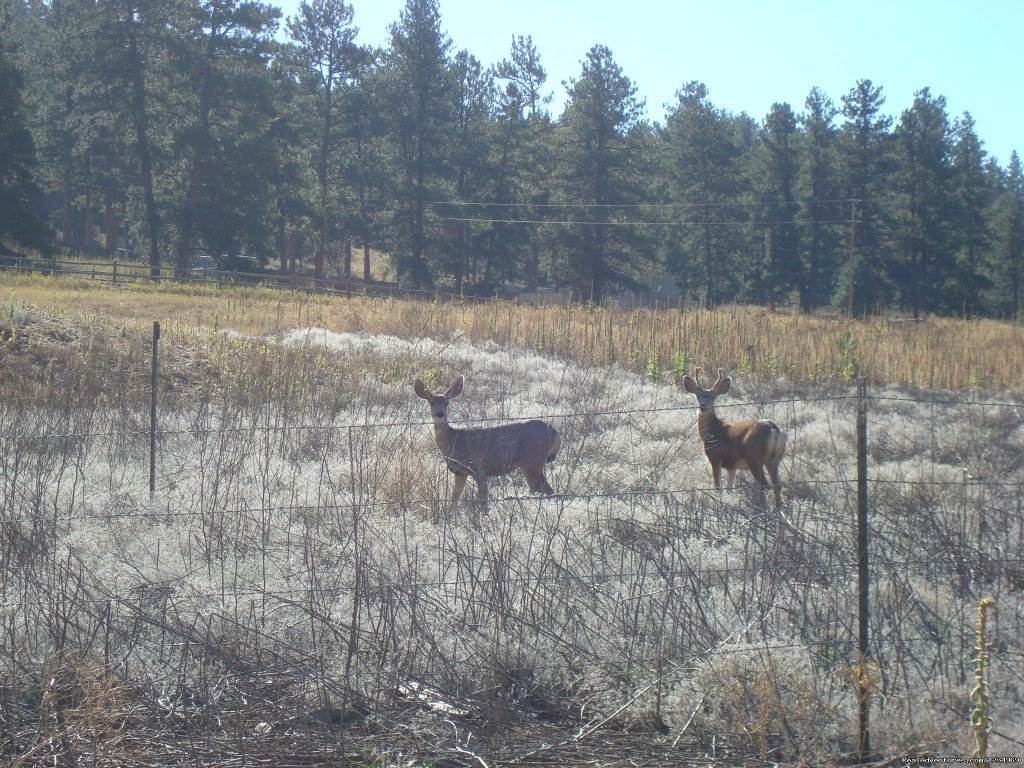 A lot of wildlife around. Deer come right to the deck. | Image #18/26 | Pikes Peak Retreat In Pikes National Forest