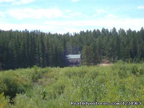 View of the house and Pike National Forest behind it - Pikes Peak Retreat In Pikes National Forest