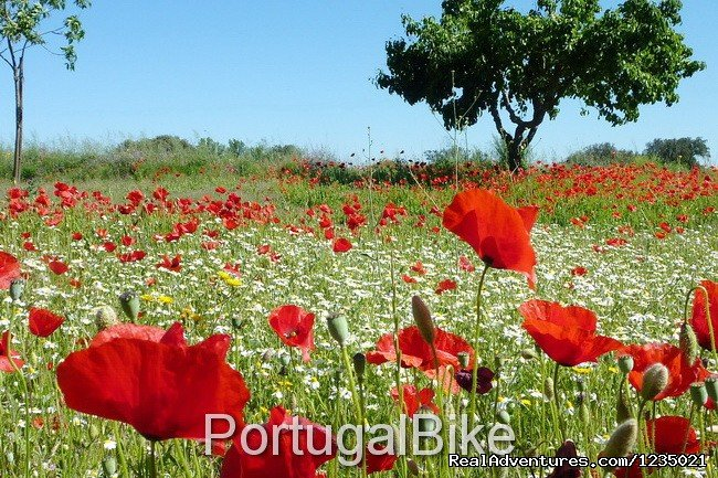 Image #21/26 | Jewels of Portugal
