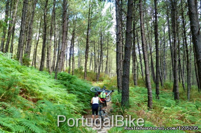 Image #10 of 26 - Camino de Santiago - The Way of St James