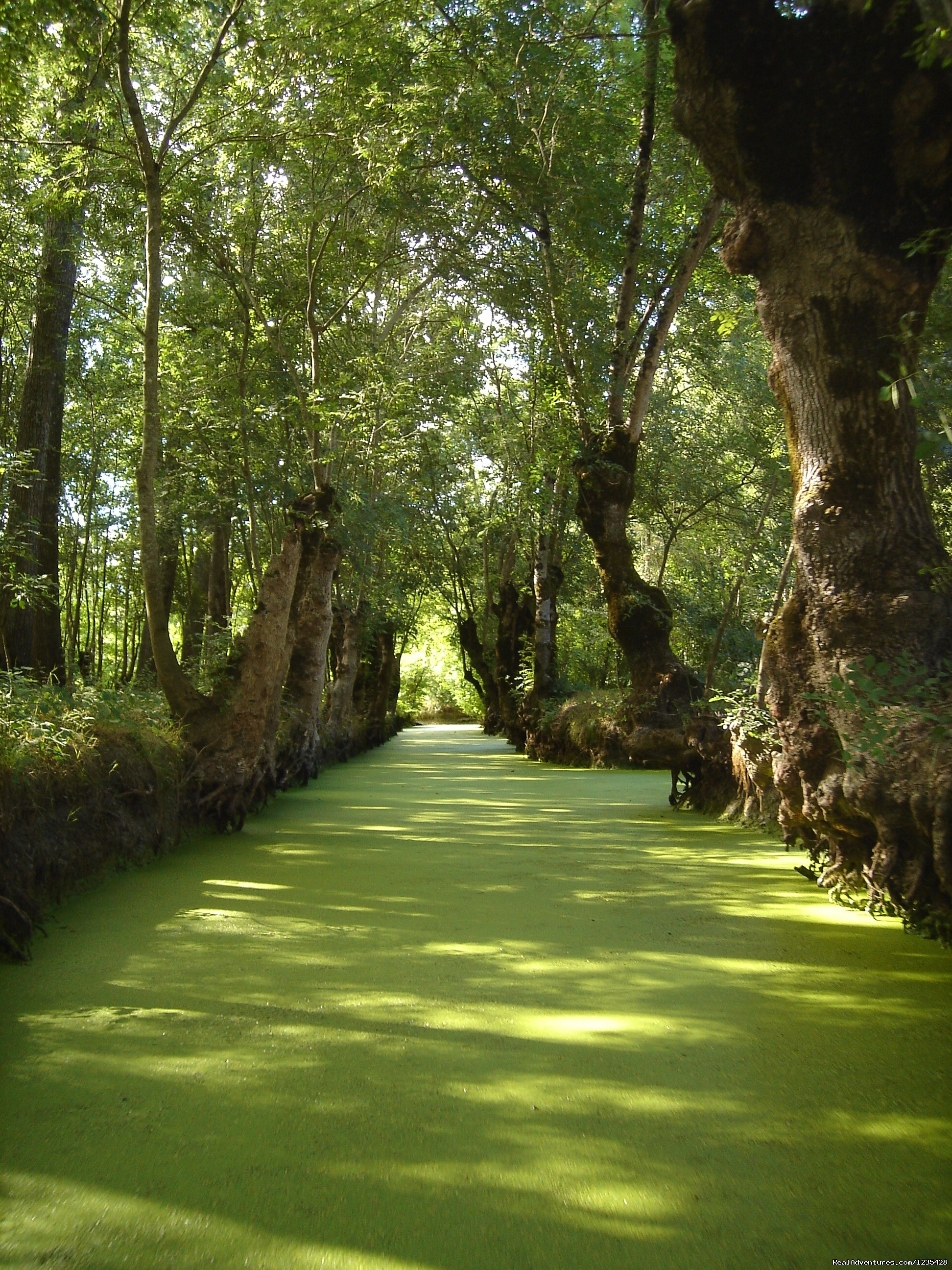 The Green Venice