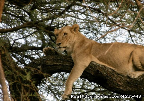 4 Days Manyara & Serengeti National park Safari: