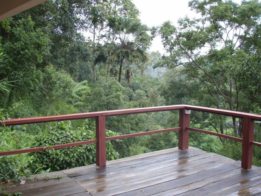 THE Rainforest Retreat in Thailand | Image #8/26 | THE Rainforest Retreat Experience in Thailand