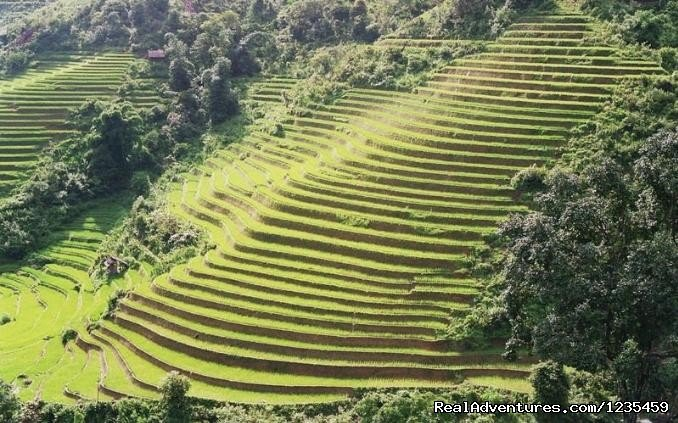 Terraced fields | Image #3/16 | Sapa adventure 2 days 1 night by bus