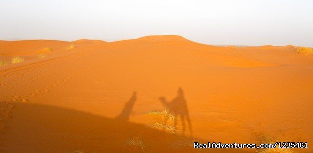 Camel rides in the desert