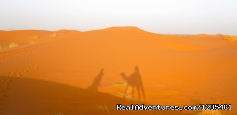 Camel rides in the desert - Real Morocco Tours