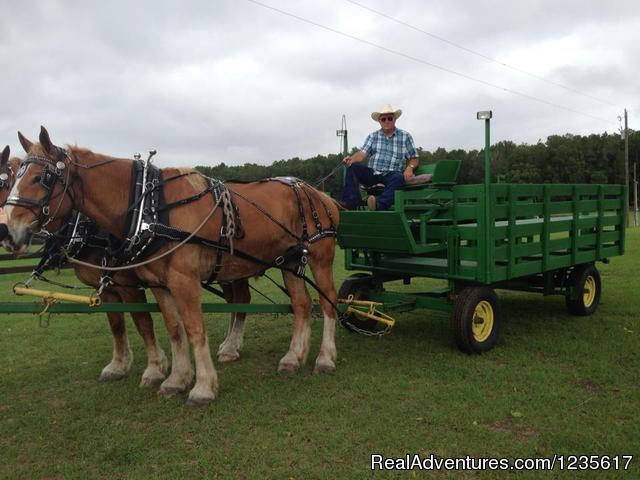 Image #16 of 23 - Horseback Riding and Trail Rides, Horse Park