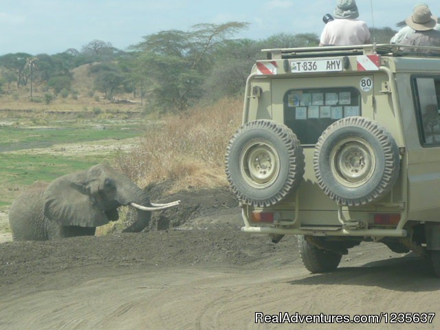 Photographic safaris with D2r Travel - Dream 2 Realities Travel- Tanzania, Kenya Safaris