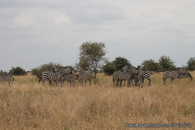 Migration Safaris - Dream 2 Realities Travel- Tanzania, Kenya Safaris