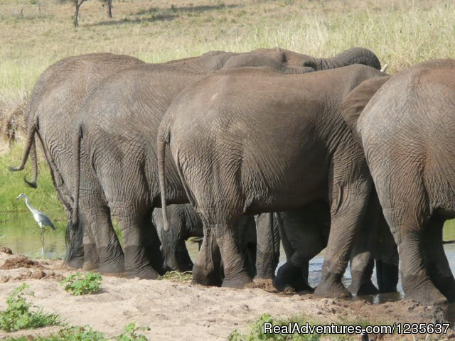 Elephant (#7 of 12) - Dream 2 Realities Travel- African Safaris