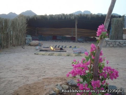 Bedouin house negmasinai - Negma Bedouia RedSea vacation without mass tourism