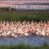 Nakuru Lake Kenya