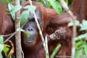 Kalimantan Tour Guide Balikpapan, Indonesia Eco Tours