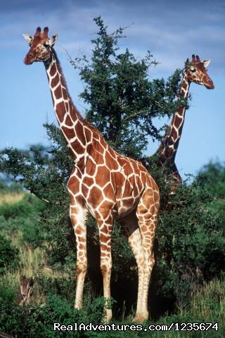 - 12 Days Tanzania wildlife Safari & Zanzibar beach