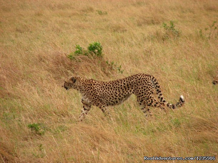 The  elusive leopard | Image #3/10 | Holiday  Getaways and Honeymoon Packages.