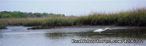 - Kayak Fishing & Eco Tours in North Florida