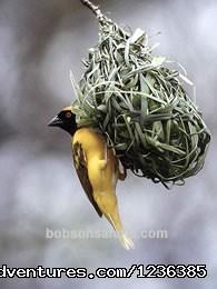 Wildlife Safaris,Birdwatching Safaris,Mombasa Beach Safaris. - Wildlife Safaris,Birdwatching Safaris,Mombasa B