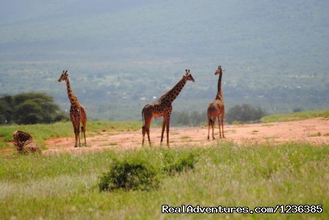 Wildlife Safaris,Birdwatching Safaris,Mombasa Beach Safaris. - Chalkoko Birding and Wildlife Safaris