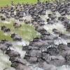 Chalkoko Birding and Wildlife Safaris Wildlife Safaris,Birdwatching Safaris,Mombasa Beach Safari