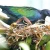 Wildlife Safaris,Birdwatching Safaris,Mombasa Beach Safaris.