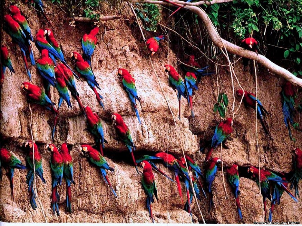 Macaw Clay Lik | Image #9/12 | Hiking Inca Trail to Machupicchu