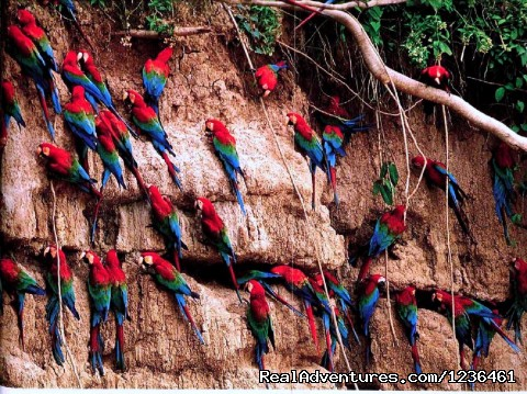 Macaw Clay Lik - Hiking Inca Trail to Machupicchu